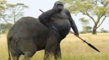 VIDEO: When Scientists Go Mad: 15 Bizarre Hybrid Animals