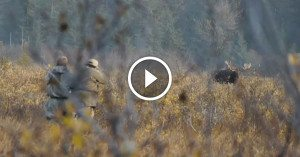 Stare down a Giant Alaskan Moose inside 120 yards without ANY cover