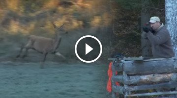 Big game hunting in the deep woods of Sweden