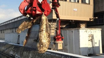 Huge fish causes Austrian dam to shut down