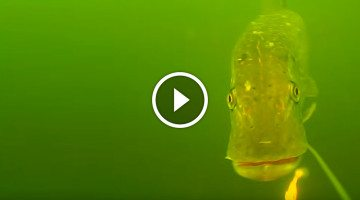 Amazing fishing line camera catches MONSTER grabbing a lure