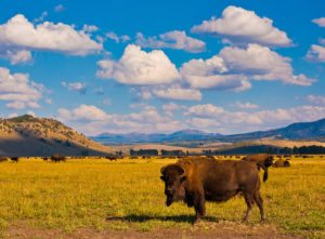 You have to visit these amazing wildlife parks in the United States