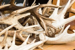 Antlers: Here's what you didn't know
