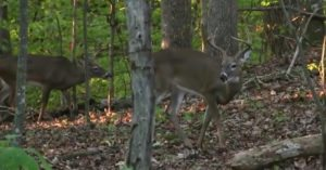 Too young to vote but old enough to hunt, 17-year-old takes his first buck with a bow