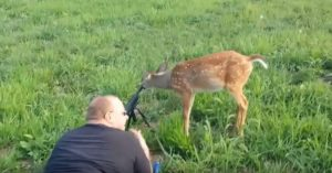Bravest fawn on the planet comes right up to hunters and licks one of their rifles