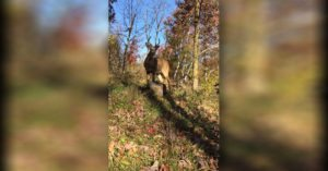 Hunter films the oddest encounter with a buck after setting up his stand