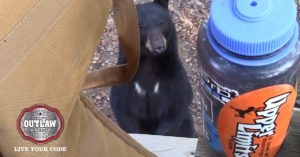 Black bear unafraid of hunters runs in terror from an even bigger bear looking for food