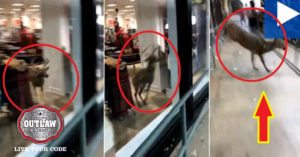 Deer breaks out of an American Eagle store on video after stumbling inside