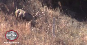 Hunter waits patiently for big mule buck to hop her neighbor's fence