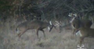Hunter catches one of the rarest deer sights possible on camera!
