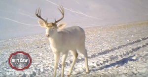 Camera captures albino deer surprised by its own shed
