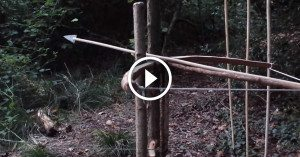 Homemade bow trap perfect for hunting or survival training