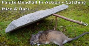 How to build the perfect primitive dead fall trap with the Paiute method