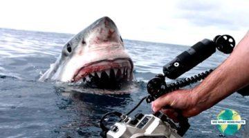 Top 5 Shark Attacks Caught on GoPro