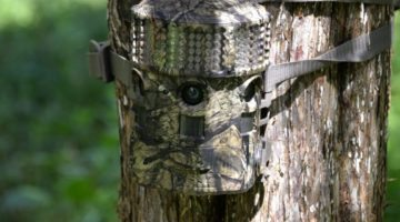 Deer Hunting Trail Camera Tips to Become a Better Hunter