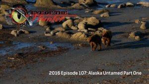 Eye of the Hunter: Alaska Untamed – Episode 1