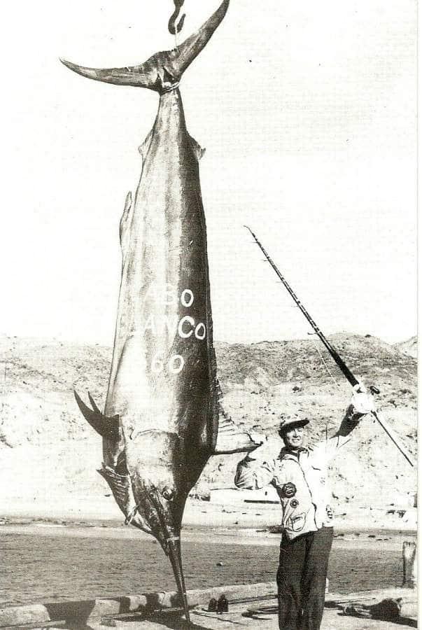 Glassel Marlin