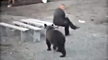 Video: 12 Insane Close Calls of Man vs Bear!