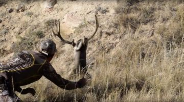 Video: Beautiful Buck Allows Sneaky Hunter to Stroke His Antlers