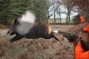 Video: Top 10 Craziest Wild Boar Shots