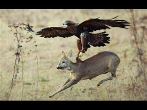 Top 3 Best Eagle Attacks! #3 is Unbelievable!