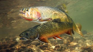 Top 5 Trout Fishing Baits To Help You Catch Trout More Consistently