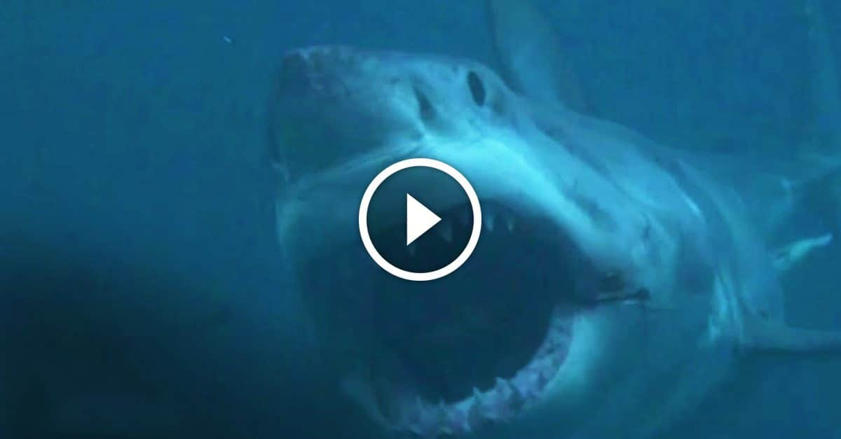Debunking myths about shark week — Does the infamous Megalodon exist? - GetZone