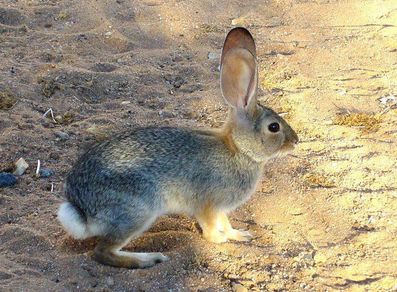 2016.06.28-Rabbit