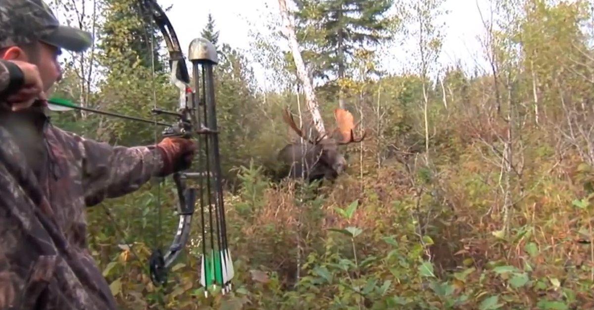 Huge moose breaks through the trees, hunter takes the shot of lifetime