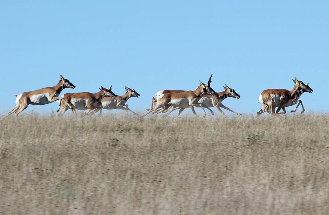 Hunting, getzone hunting, budget hunting, budget friendly hunting, antelope