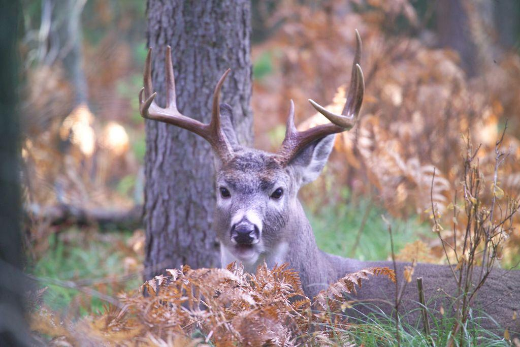 deer, deer hunting, getzone hunting, hunting, whitetail