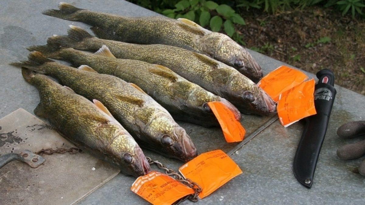 fish poachers, fish poaching, poaching, fishing, fishing violation, illegal fishing
