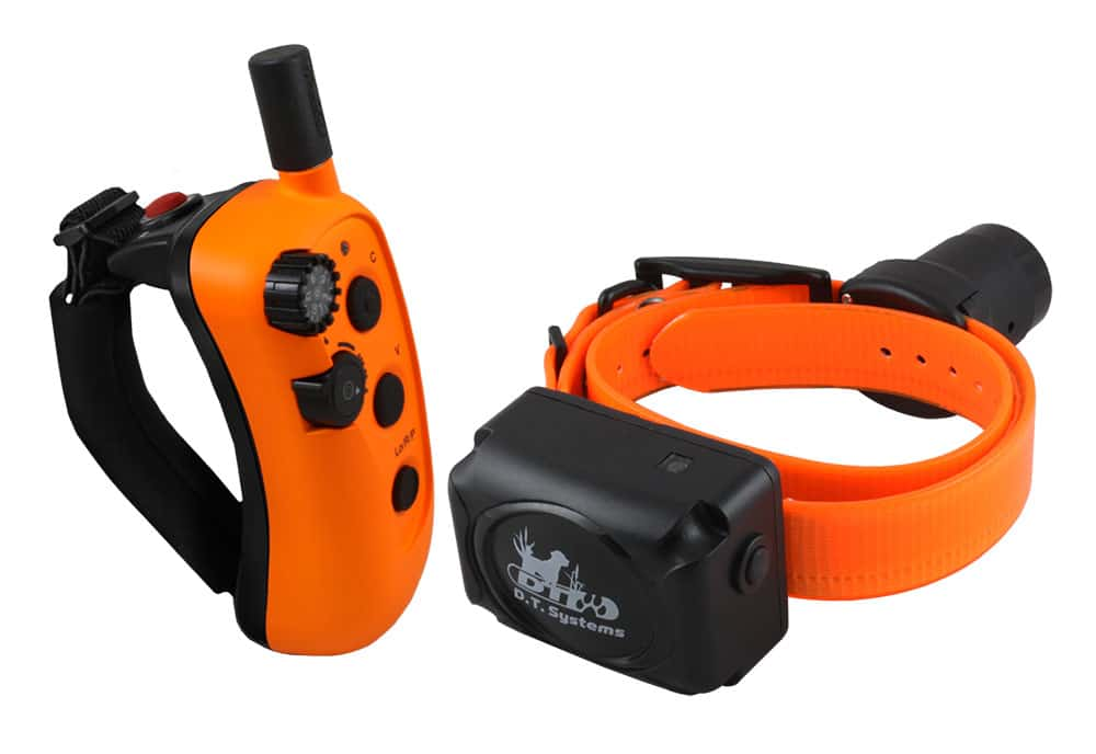hunting dogs, dogs, hunting, dog gear