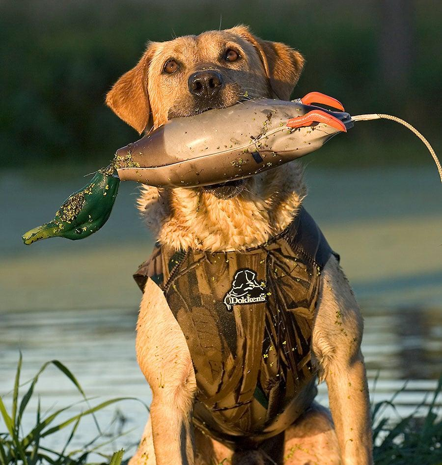 hunting dogs, hunting, dogs, dog gear