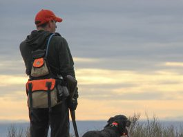 hunting dogs, dog gear, hunting, dogs