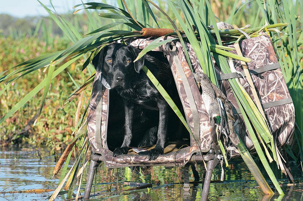 dogs, hunting dogs, hunting, dog gear
