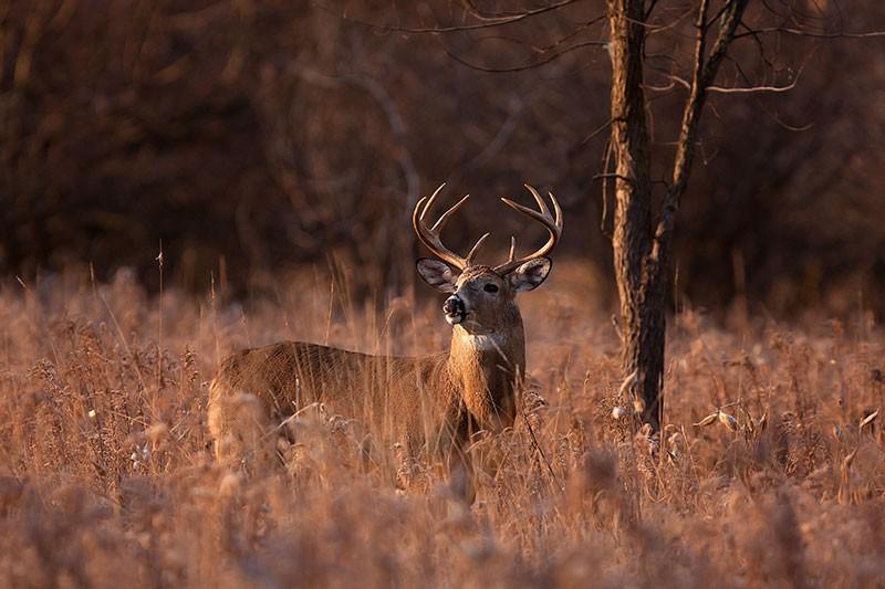 deer behaviors