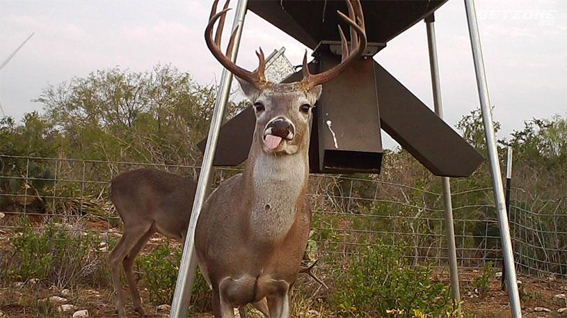 deer feeders