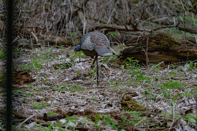decoys for turkey hunting
