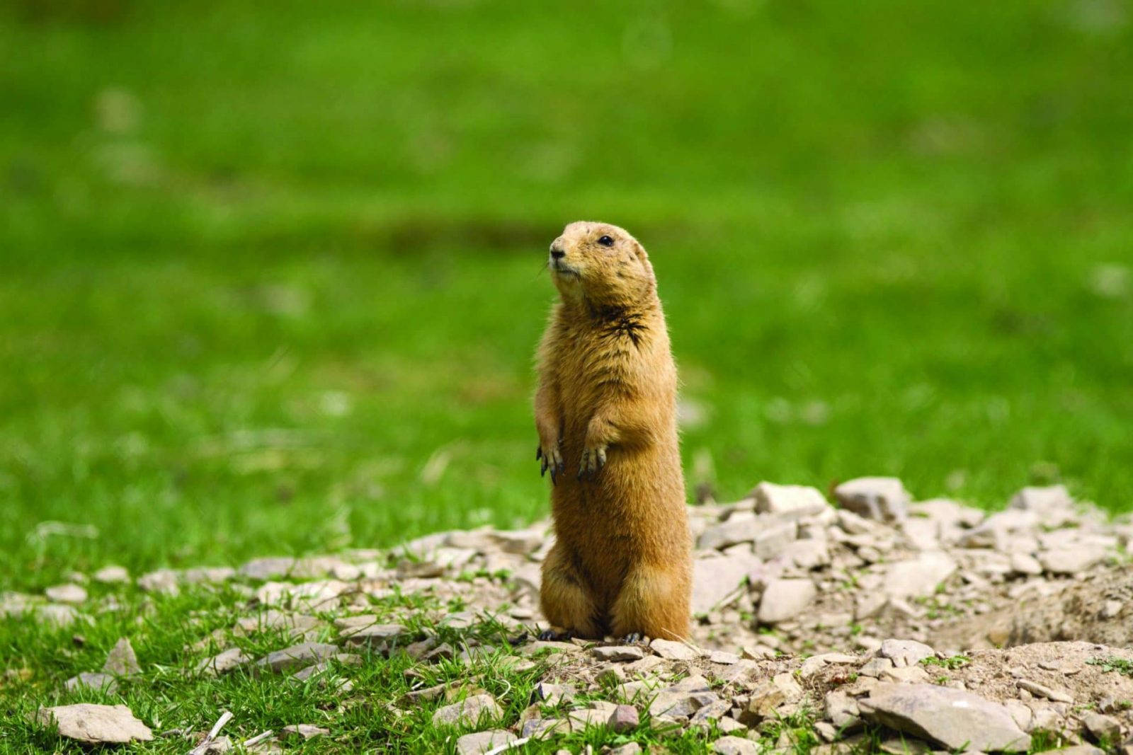 The Best Prairie Dog Hunting Video