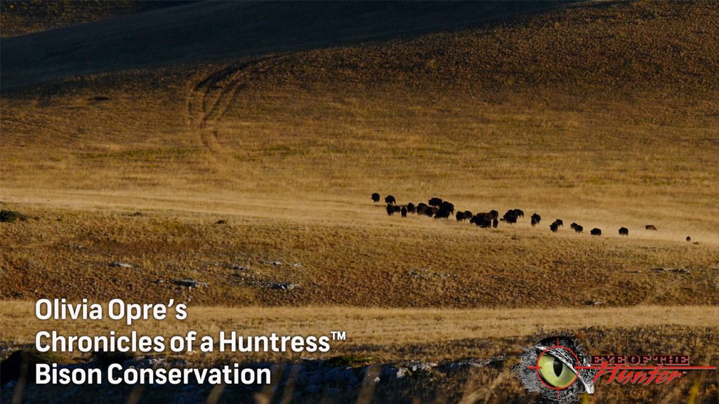 Chronicles-of-a-Huntress-Bison-Conservation
