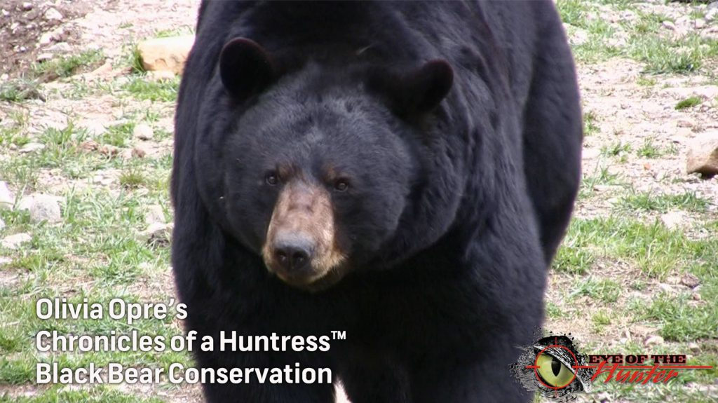 Chronicles-of-a-Huntress-Black-Bear-Conservation