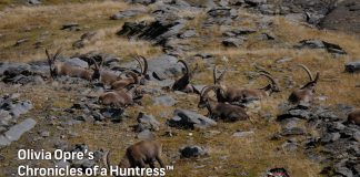 Chronicles-of-a-Huntress-Europe-hunting