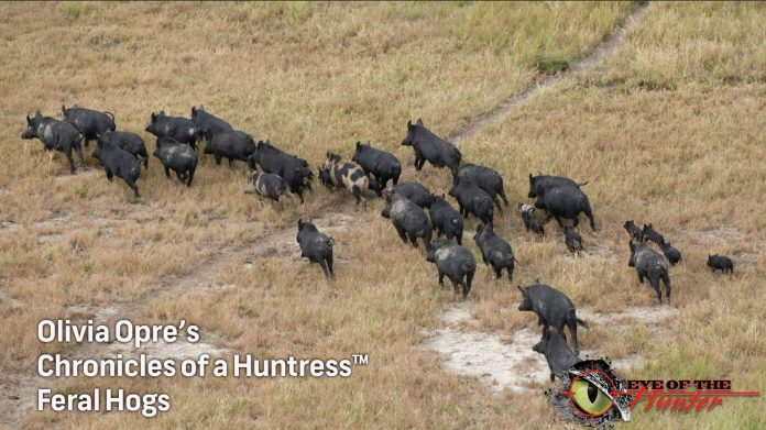Chronicles-of-a-Huntress-Feral-Hogs-hunting