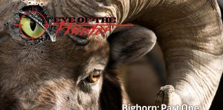 Eye of the Hunter Big Horn Sheep