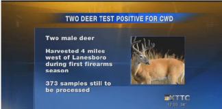 deer disease