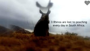 3 rhinos are killed daily