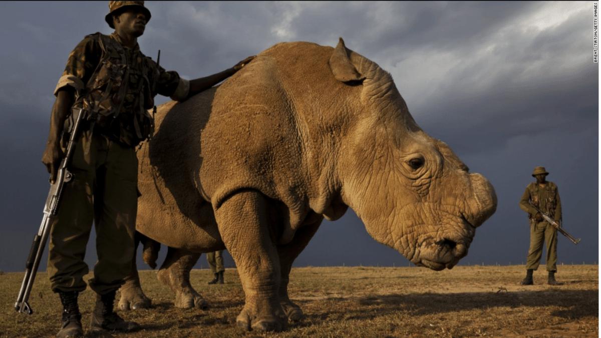 sudan last male rhino on earth