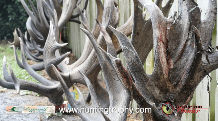 hunting trophy coppersmith