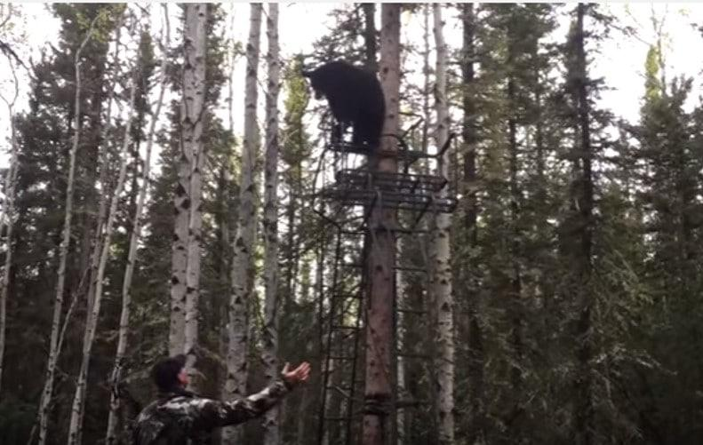 Video Hunter Argues With Baby Bear Occupying His Tree